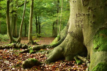 Encrypted Tree